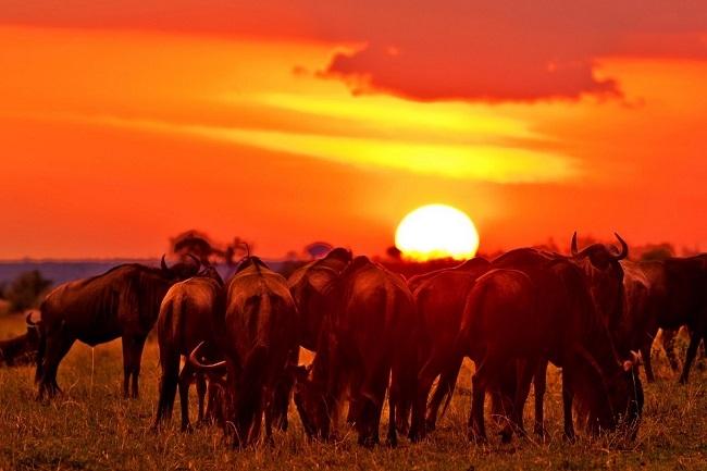 Encantos de Kenia