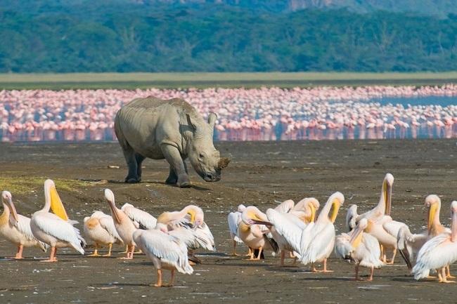 Kenia y Playas de Zanzíbar