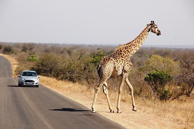 Con auto - Sudáfrica al Completo