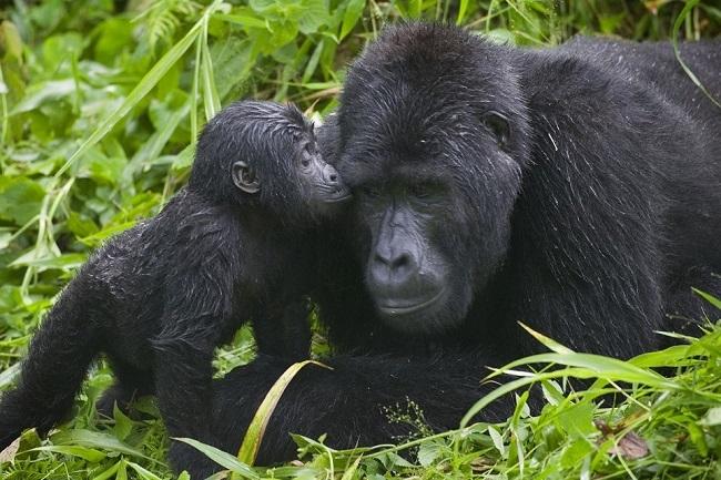 Uganda y Kenia