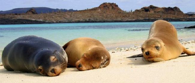 Gal�pagos Islas Encantadas (hasta Diciembre 2015)