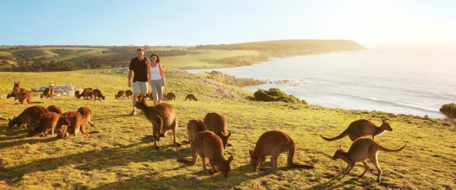 SALIDA GRUPAL AUSTRALIA & NUEVA ZELANDA 2018