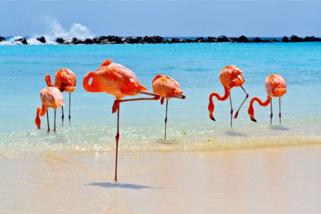 Aruba Febrero 2019