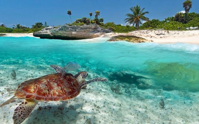 Cancun Marzo 2019
