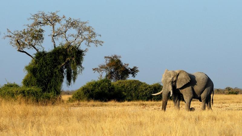 SUDÁFRICA ESENCIAL Y CATARATAS VICTORIA (ZIMBABWE) CON CHOBE