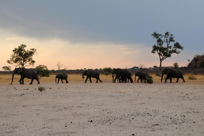 DESCUBRIENDO SUDAFRICA Y CATARATAS VICTORIA (ZAMBIA) CON CHOBE