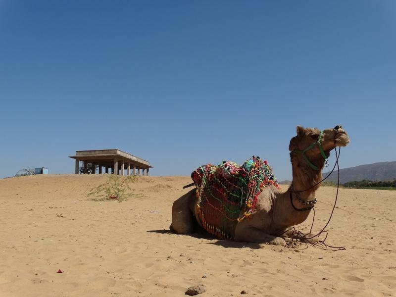 INDIA: RAJASTHAN AL COMPLETO Y NEPAL